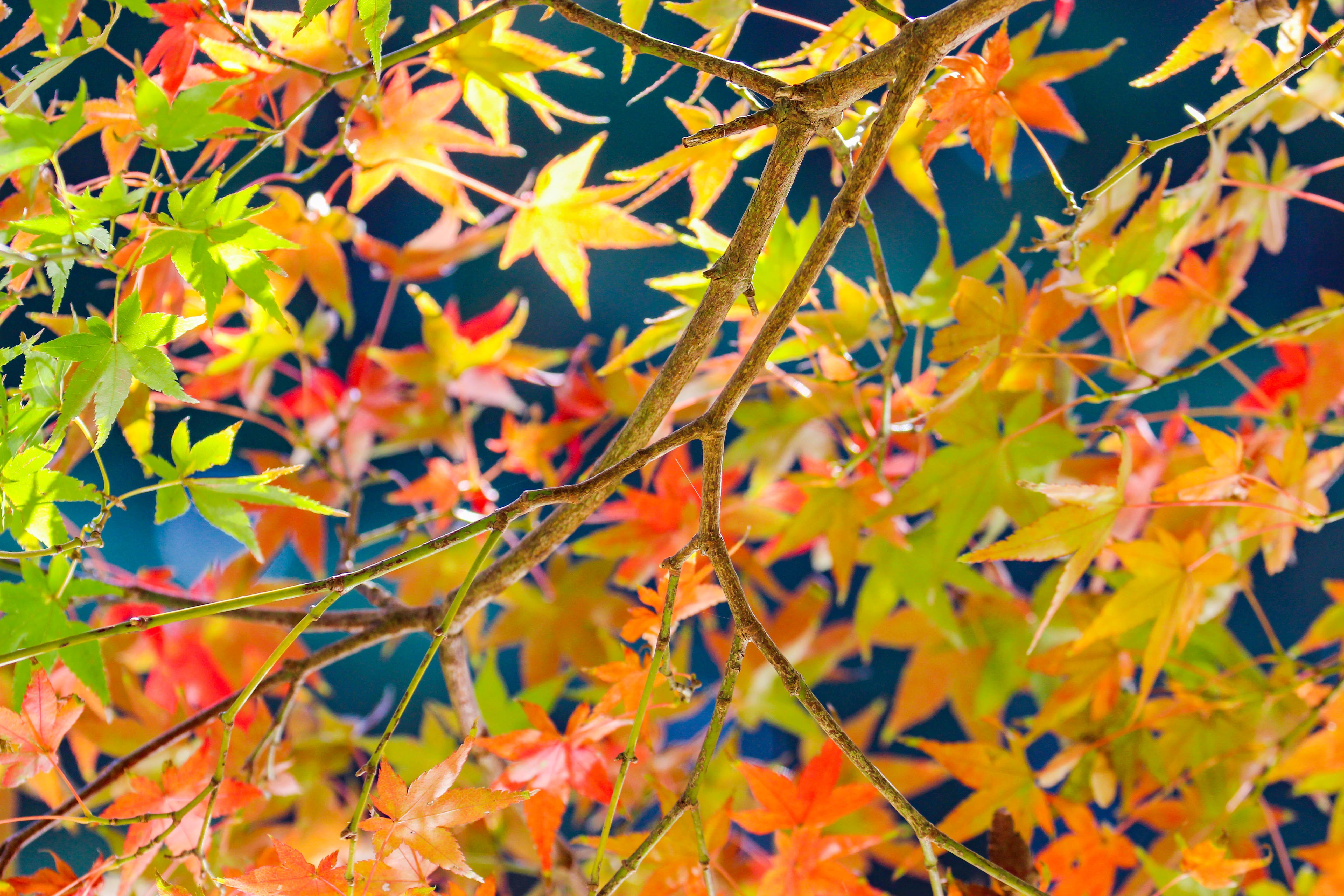秋の深まりとともに徐々に変化していく
