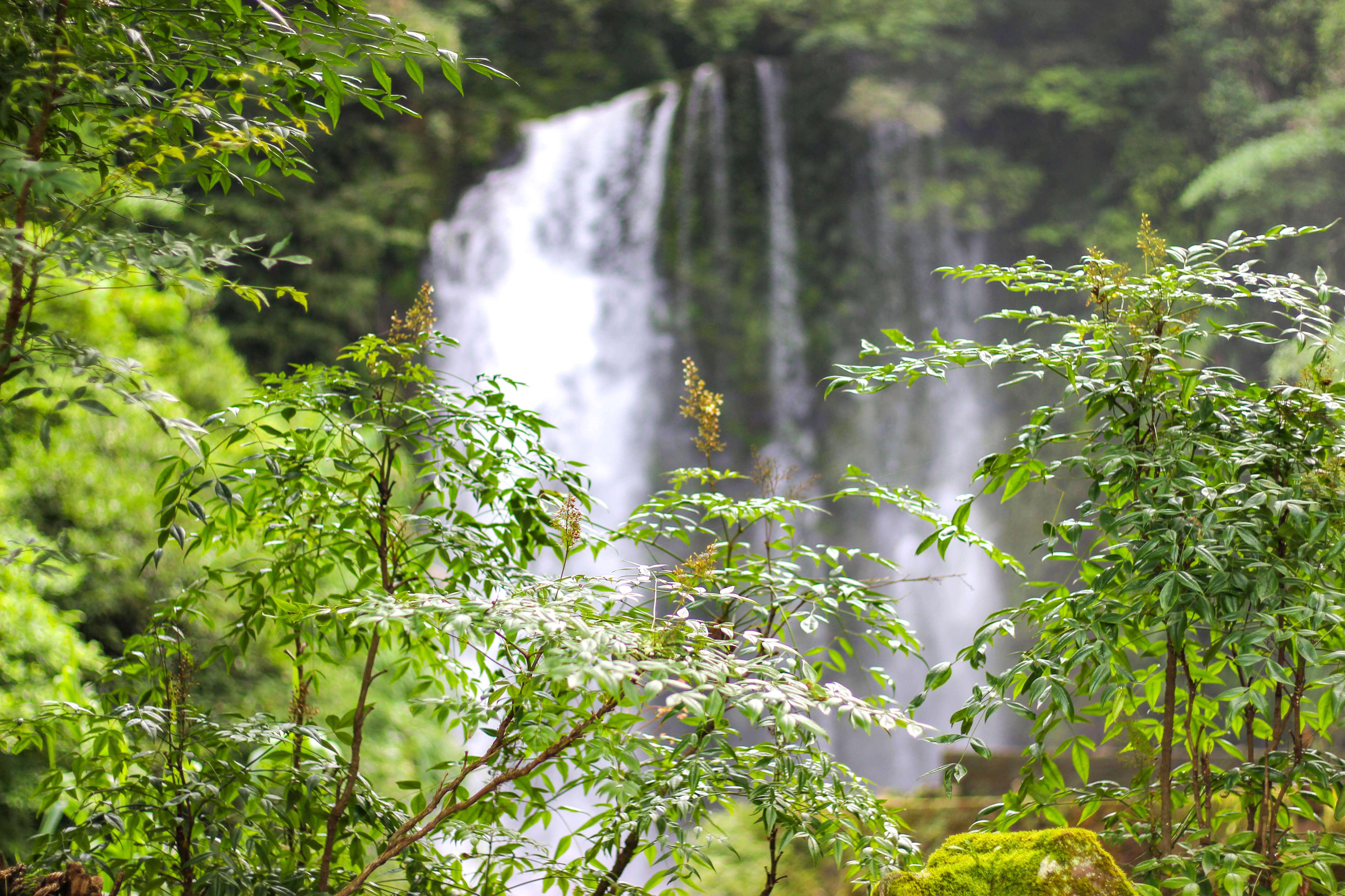 緑の背景に美しく流れる滝