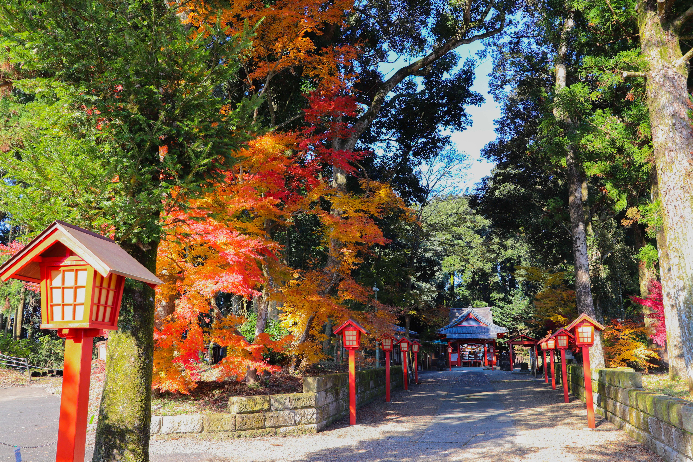 皆、紅葉の名所 曽木の滝に行っている。近くにこういう場所があることも知ってほしい