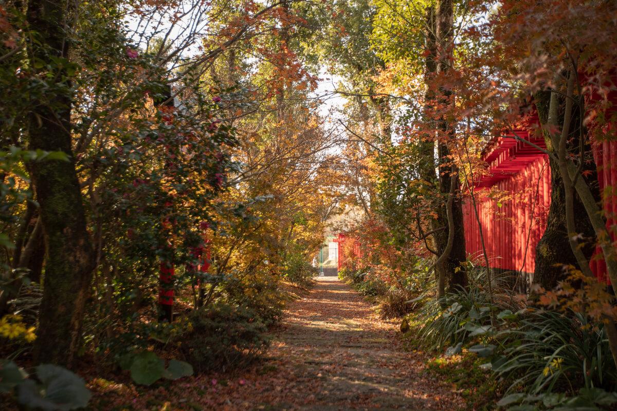 連続した鳥居の横には紅葉の並木道